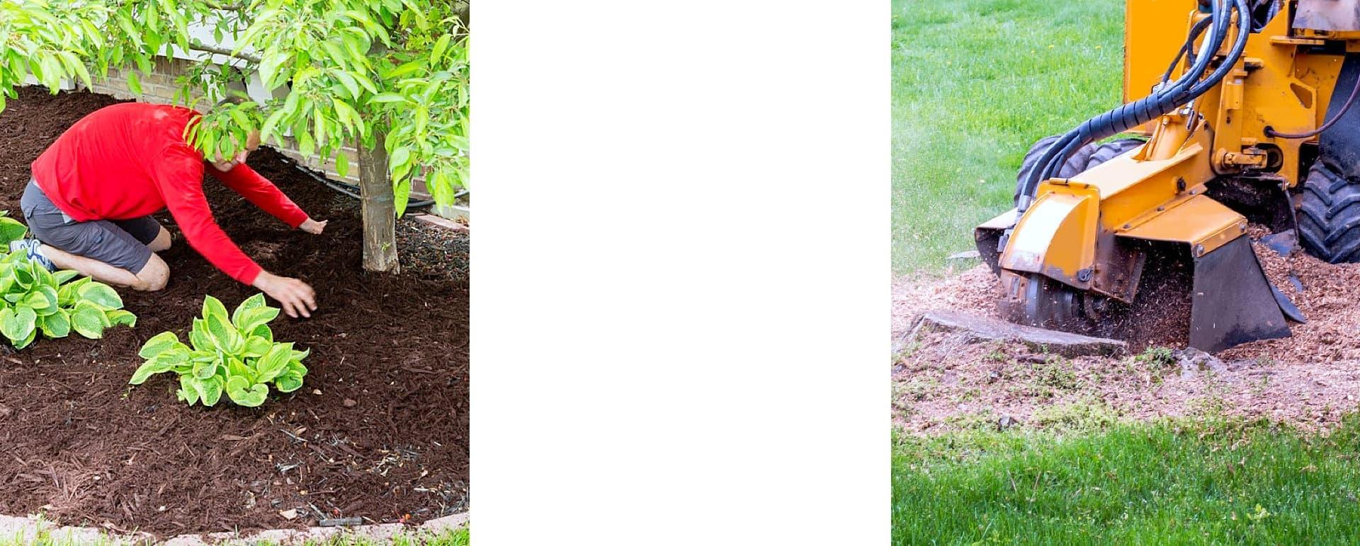 male gardener working in the garden and stump grinder machine grinding up tree stump saw dust mulch
