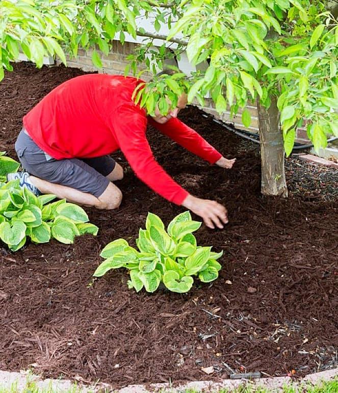 male gardener working in the garden
