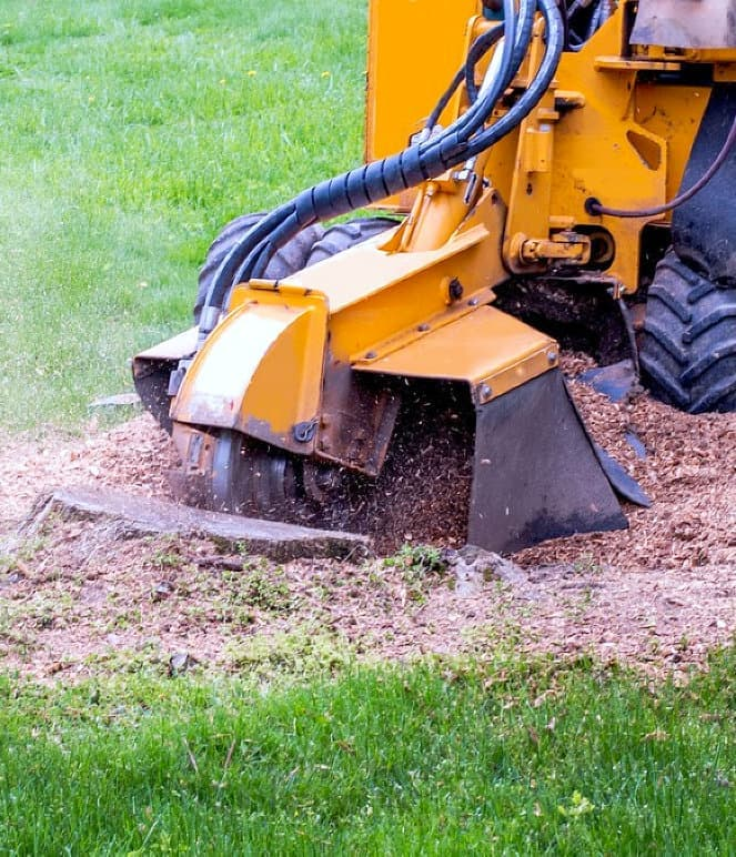 stump grinder machine grinding up tree stump saw dust mulch
