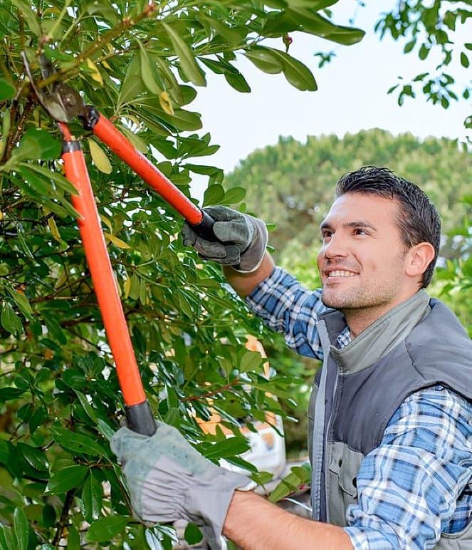 male gardener cutting leaves smiling